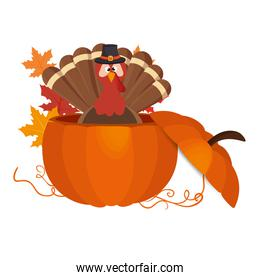 Thanksgiving turkey character icon