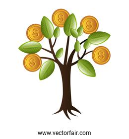 money plant with coins