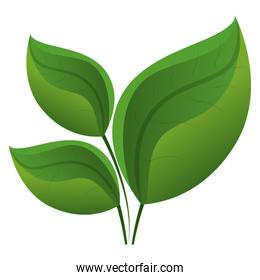 leaf plant isolated icon