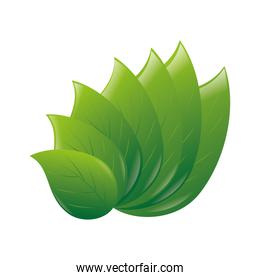 leafs plant ecology icon