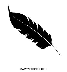beauty and exotic feather