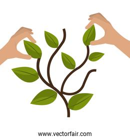 hands with plant ecology