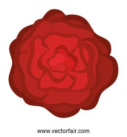 beautiful rose decoration icon