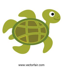 cute turtle character icon