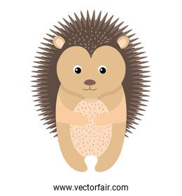 cute and tender Porcupine