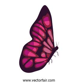 beautiful butterfly decorative icon