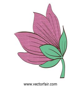 tropical and exotic flower decorative
