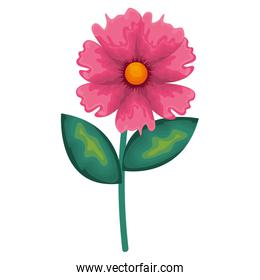 beautiful flower decorative icon