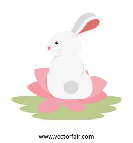 pretty and little rabbit in lotus flower character