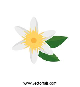 beautiful flower with leafs garden decorative icon