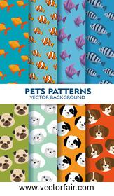 set pets patterns backgrouns