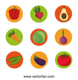 fresh vegetables organic and healthy food