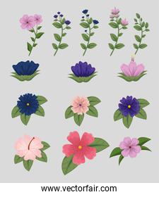 set flowers plants with leaves nature design