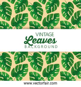 natural leaves plants pattern  background