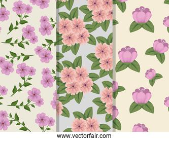 set floral style with petals and leaves background