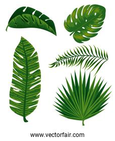 set tropical branches leaves plants