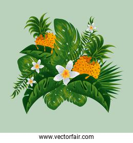 flowers plants with pineapples and nature leaves