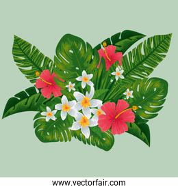 exotic flowers plants with nature leaves