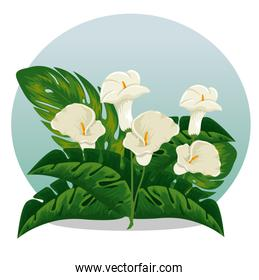 exotic flowers plants with natural leaves