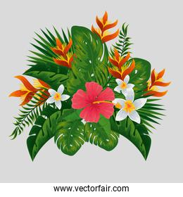 exotic flowers plants and branches leaves