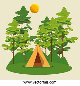 nature landscape with camp and trees with sun