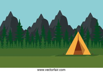 pines trees with mountains landscape and camp