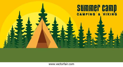 nature pines trees landscape with camp