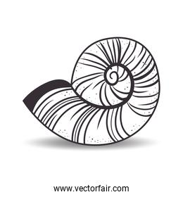 hand drawing nautilus shell icon
