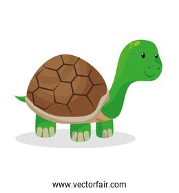 turtle pet shop isolated icon