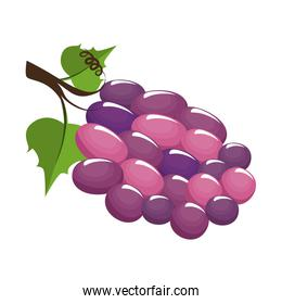 wine grapes fruit icon