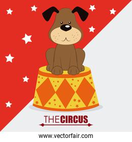 Circus design over white and red  background vector illustration