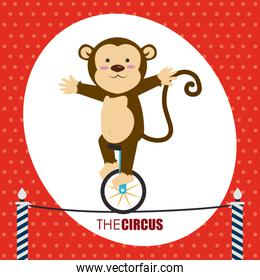 Circus design over red background vector illustration