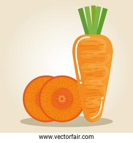 carrot fresh and healthy vegetable