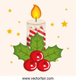 christmas candles with fir branches and holly berries