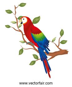 tropical parrot in branch tree