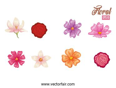 beautiful flowers set decorative icon
