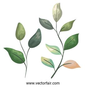 set exotic plants with leaves branches design