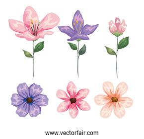 set exotic flowers plants with nature leaves