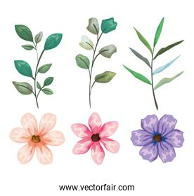 set exotic flowers and leaves plants