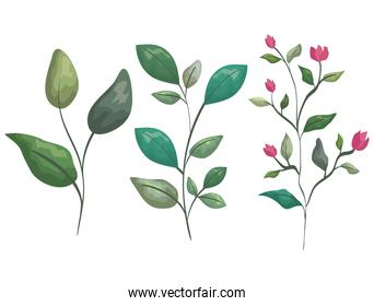set branches leaves plants with exotic flowers