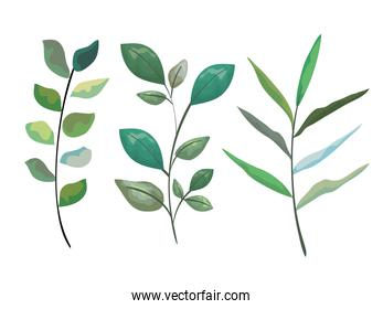 collection tropical branches leaves plants
