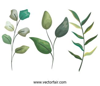 set natural branches leaves plants style