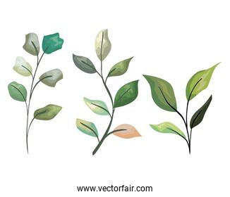 set tropical branches leaves plants style