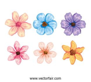 set tropical flowers plants with exotic petals