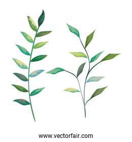 set nature branches with leaves plants