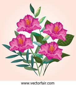 beauty flowers plants with exotic leaves