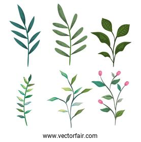 set exotic branches with tropical leaves plants