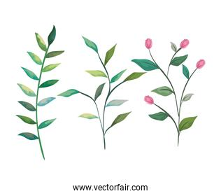 set tropical branches with nature leaves plants