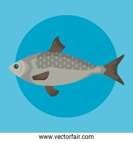 fish sea animal with scales and tail