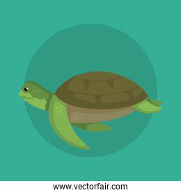 turtle wild sea animal with shell